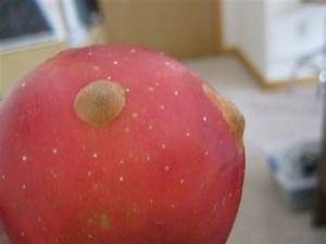 Bumps On Apples