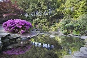 Wann Blüht Der Rhododendron : rhododendron pflanzzeit wann ist die beste zeit zum pflanzen ~ Eleganceandgraceweddings.com Haus und Dekorationen
