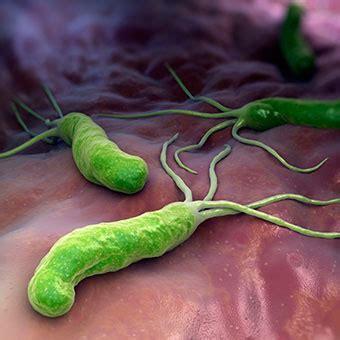 bactérie helicobacter pylori symptomes h pylori stomach infection treatment symptoms test