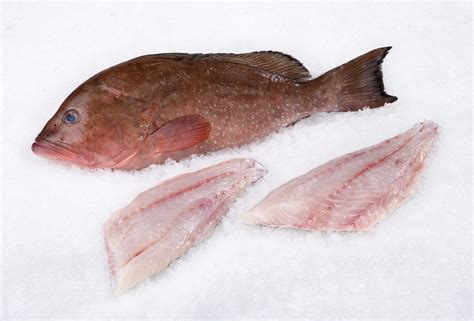 grouper fillet fish wild population fresh striped whole mobile bass ecosystem