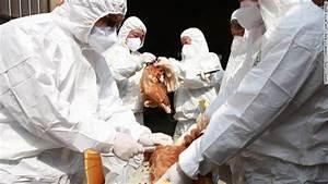 World U0026 39 S First Human Case Of H7n4 Bird Flu Identified In