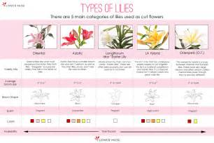 Different Types of Lilies Flowers