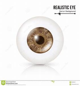 Anatomy Of The Human Eye In Front View Vector Illustration
