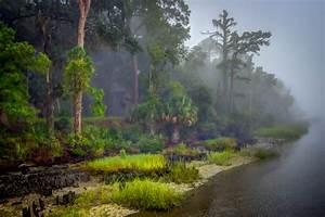 Wallpaper, Sunlight, Trees, Landscape, Lake, Sand, Reflection, Grass, Sky, Mud, Morning, Mist