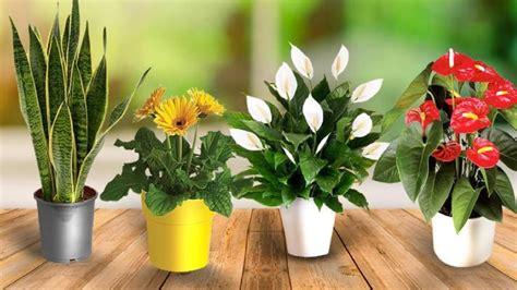 bedroom plants  purify  air improve  sleep