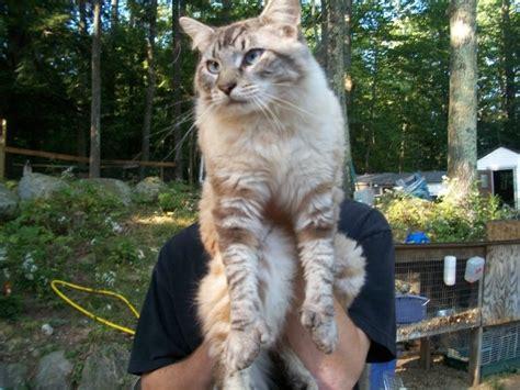 cat finders long  medium length fur
