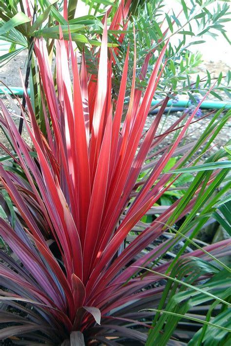 14 Tips And Tricks From A Master Gardener Pinterest