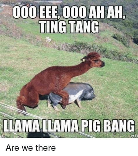 25 Best Memes About Yall Yall Memes Llamas Memes Www Pixshark Images Galleries