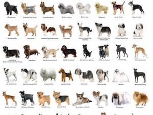 how do i what breed my cat is razze di cani elenco soul educatore cinofilo torino