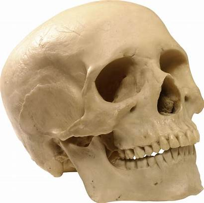 Skull Transparent Skeleton Head Background Icon Clipart