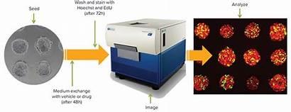Cell Imaging Spheroid Cancer Spheroids Workflow
