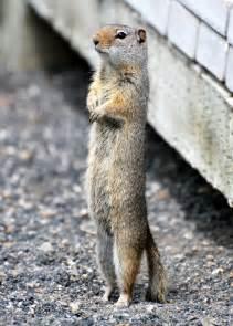 Cute Squirrel Quotes