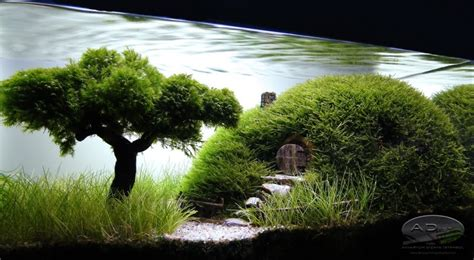 11 Mindblowing Aquascapes That Will Enchant Your Socks Off