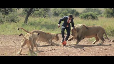 une belle lecon lhomme  les lions documentaire