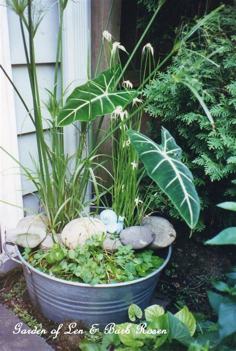 Diy  Create Your Own Water Garden In A Container! Our