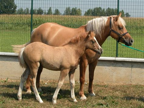 horse cloned horses clone clones born cloning foal baby 2003 equine identical italians say coming march there referenced