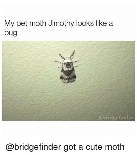 Moth Meme - 25 best memes about cute moths cute moths memes