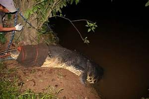 Man-Eating Super Croc : Programs : Animal Planet ...