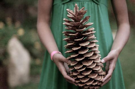 Giant Sugar Pine Cones (Set of 2)