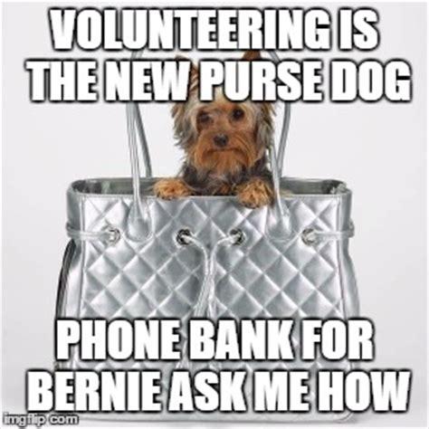 Dog On Phone Meme - volunteers imgflip