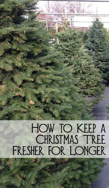 how to keep a christmas tree fresher for longer trees