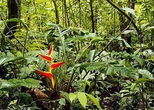 The Oriente, Ecuador's Amazonian region | Insight Guides