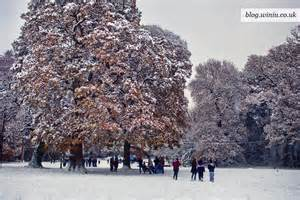 Common Winter Southampton UK