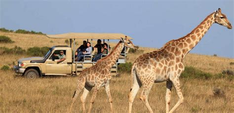 Garden Route And Safari By Hotspots2c With 42 Tour Reviews