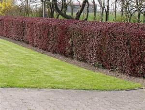 Pflanzen Pflegeleicht Garten : anleitung zum hecke pflanzen im garten ~ Lizthompson.info Haus und Dekorationen
