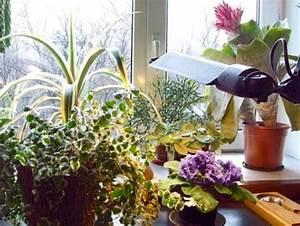 Pflege Von Zimmerpflanzen : wie man die richtigen bedingungen schafft vermehrung pflege von zimmerpflanzen ~ Markanthonyermac.com Haus und Dekorationen