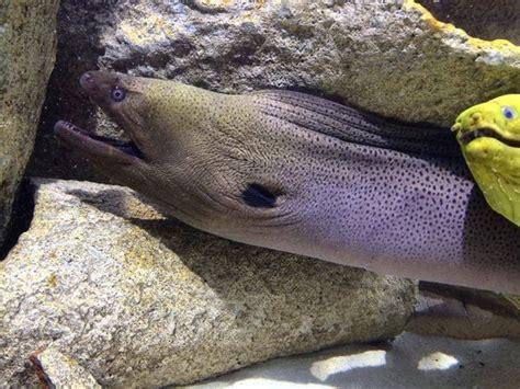 aquarium amneville horaires et tarifs visite amneville