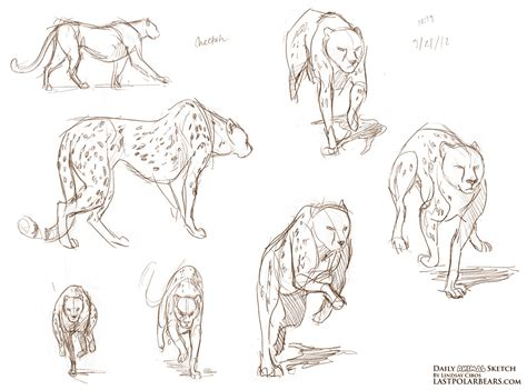 daily animal sketch big cats    polar bears