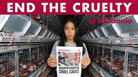 Easyhotel and ibis budget also performed badly in an annual satisfaction survey by the. Petition · Robert Ferrari: Britannia Hotels Must Go Cage-Free Now! · Change.org (With images ...