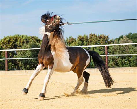 horse pony scared similar lunge