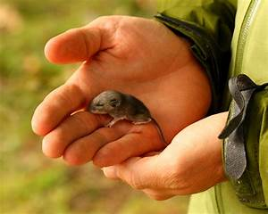 vole baby vole (and more owl pics) | feralzach