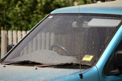 remove dead bugs   cars windshield