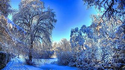 Winter Forest Wallpapers Backgrounds