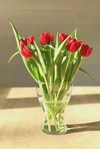 Tulpen In Vase : 10 tolle ideen f r tulpen drinnen draussen soulsister meets friends ~ Orissabook.com Haus und Dekorationen