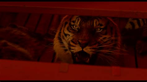 Life Of Pi Wallpapers, Pictures, Images