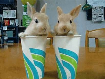 Animals Cups Adorable Animal Admin Posted Am
