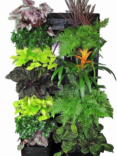 Garden Vertical Tropical Kit Edible Walls Kits