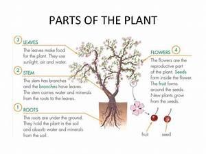 Sciences Plants T 3