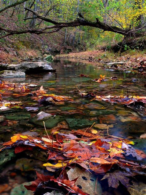 streams  autumn leaves tennessee nature