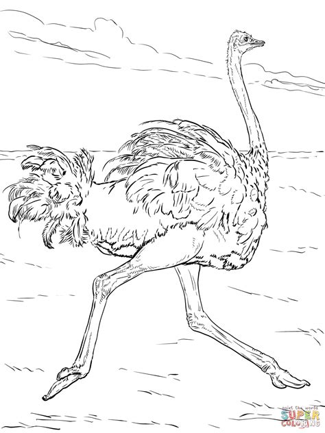 safari animals coloring page coloring home