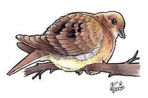 Mourning Dove by twapa on DeviantArt