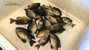 Catching Blue Gills On The Mississippi River - YouTube