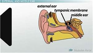 The Ear: Middle Structures and Hearing Functions - Video ...