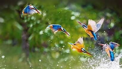 Kingfishers Taipei Bing