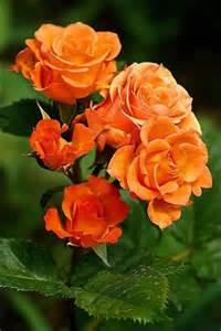Pinterest Beautiful Garden Flowers
