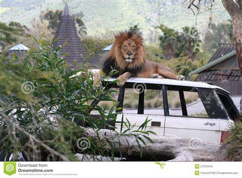 lion car image gallery lion car